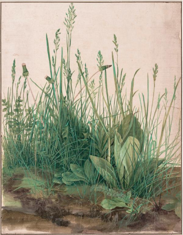 Albrecht Dürer (1471-1528), La grande touffe d'herbes, 1503. Dessin à l'aquarelle et la gouache, 41 × 31,5 cm. Collection graphique du Musée Albertina à Vienne.